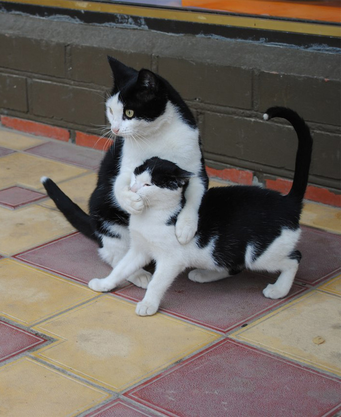 XX-Cats-With-Their-Mini-Mes12__700